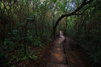 MaunawiliTrail2
